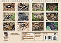 Vogelspinnen (Theraphosidae)CH-Version (Wandkalender 2019 DIN A4 quer) - Produktdetailbild 13