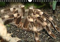 Vogelspinnen (Theraphosidae)CH-Version (Wandkalender 2019 DIN A4 quer) - Produktdetailbild 8