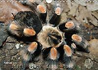 Vogelspinnen (Theraphosidae)CH-Version (Wandkalender 2019 DIN A4 quer) - Produktdetailbild 2