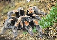 Vogelspinnen (Theraphosidae)CH-Version (Wandkalender 2019 DIN A4 quer) - Produktdetailbild 5