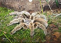 Vogelspinnen (Theraphosidae)CH-Version (Wandkalender 2019 DIN A4 quer) - Produktdetailbild 7