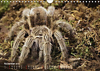Vogelspinnen (Theraphosidae)CH-Version (Wandkalender 2019 DIN A4 quer) - Produktdetailbild 11