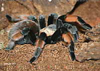 Vogelspinnen (Theraphosidae)CH-Version (Wandkalender 2019 DIN A2 quer) - Produktdetailbild 1