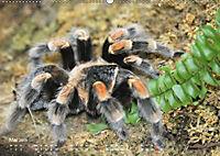 Vogelspinnen (Theraphosidae)CH-Version (Wandkalender 2019 DIN A2 quer) - Produktdetailbild 5