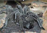 Vogelspinnen (Theraphosidae)CH-Version (Wandkalender 2019 DIN A2 quer) - Produktdetailbild 6