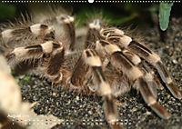 Vogelspinnen (Theraphosidae)CH-Version (Wandkalender 2019 DIN A2 quer) - Produktdetailbild 8