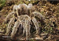 Vogelspinnen (Theraphosidae)CH-Version (Wandkalender 2019 DIN A2 quer) - Produktdetailbild 11