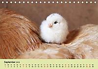 Vom Ei zum Huhn. Die Entwicklung von Küken (Tischkalender 2019 DIN A5 quer) - Produktdetailbild 4