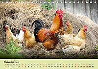 Vom Ei zum Huhn. Die Entwicklung von Küken (Tischkalender 2019 DIN A5 quer) - Produktdetailbild 13