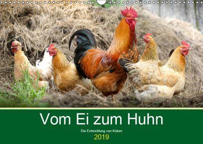 Vom Ei zum Huhn. Die Entwicklung von Küken (Wandkalender 2019 DIN A3 quer), Rose Hurley
