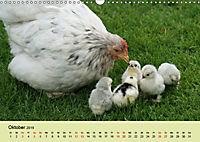 Vom Ei zum Huhn. Die Entwicklung von Küken (Wandkalender 2019 DIN A3 quer) - Produktdetailbild 10