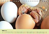 Vom Ei zum Huhn. Die Entwicklung von Küken (Tischkalender 2019 DIN A5 quer) - Produktdetailbild 3