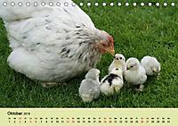 Vom Ei zum Huhn. Die Entwicklung von Küken (Tischkalender 2019 DIN A5 quer) - Produktdetailbild 10