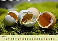 Vom Ei zum Huhn. Die Entwicklung von Küken (Wandkalender 2019 DIN A2 quer) - Produktdetailbild 5