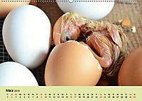 Vom Ei zum Huhn. Die Entwicklung von Küken (Wandkalender 2019 DIN A2 quer) - Produktdetailbild 3