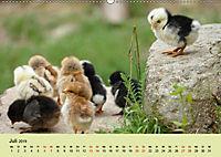 Vom Ei zum Huhn. Die Entwicklung von Küken (Wandkalender 2019 DIN A2 quer) - Produktdetailbild 7