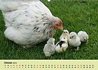 Vom Ei zum Huhn. Die Entwicklung von Küken (Wandkalender 2019 DIN A2 quer) - Produktdetailbild 10