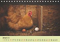 Vom Ei zum Huhn. Die Entwicklung von Küken (Tischkalender 2019 DIN A5 quer) - Produktdetailbild 1