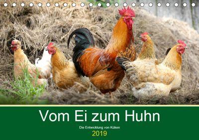 Vom Ei zum Huhn. Die Entwicklung von Küken (Tischkalender 2019 DIN A5 quer), Rose Hurley