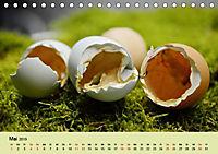 Vom Ei zum Huhn. Die Entwicklung von Küken (Tischkalender 2019 DIN A5 quer) - Produktdetailbild 5