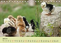 Vom Ei zum Huhn. Die Entwicklung von Küken (Tischkalender 2019 DIN A5 quer) - Produktdetailbild 7