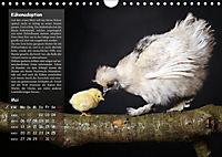 Von der Einzigartigkeit der Hühner (Wandkalender 2019 DIN A4 quer) - Produktdetailbild 5