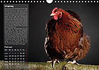 Von der Einzigartigkeit der Hühner (Wandkalender 2019 DIN A4 quer) - Produktdetailbild 2