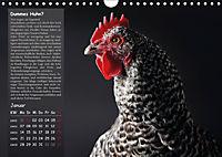 Von der Einzigartigkeit der Hühner (Wandkalender 2019 DIN A4 quer) - Produktdetailbild 1