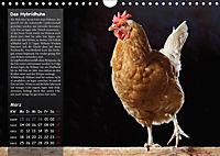 Von der Einzigartigkeit der Hühner (Wandkalender 2019 DIN A4 quer) - Produktdetailbild 3