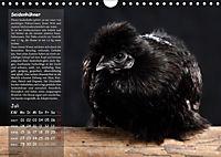 Von der Einzigartigkeit der Hühner (Wandkalender 2019 DIN A4 quer) - Produktdetailbild 7