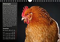 Von der Einzigartigkeit der Hühner (Wandkalender 2019 DIN A4 quer) - Produktdetailbild 11