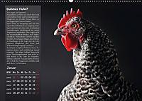 Von der Einzigartigkeit der Hühner (Wandkalender 2019 DIN A2 quer) - Produktdetailbild 1
