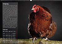 Von der Einzigartigkeit der Hühner (Wandkalender 2019 DIN A2 quer) - Produktdetailbild 2