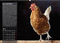 Von der Einzigartigkeit der Hühner (Wandkalender 2019 DIN A2 quer) - Produktdetailbild 3