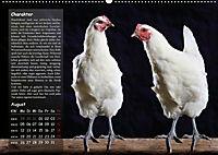 Von der Einzigartigkeit der Hühner (Wandkalender 2019 DIN A2 quer) - Produktdetailbild 8