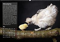 Von der Einzigartigkeit der Hühner (Wandkalender 2019 DIN A2 quer) - Produktdetailbild 5