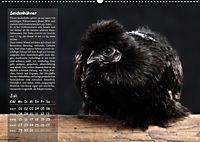 Von der Einzigartigkeit der Hühner (Wandkalender 2019 DIN A2 quer) - Produktdetailbild 7