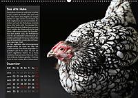Von der Einzigartigkeit der Hühner (Wandkalender 2019 DIN A2 quer) - Produktdetailbild 12