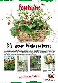 Walderdbeere Fontaine, 2 Stck - Produktdetailbild 2