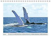 Wale: Giganten der Meere (Tischkalender 2019 DIN A5 quer) - Produktdetailbild 5