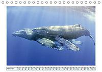 Wale: Giganten der Meere (Tischkalender 2019 DIN A5 quer) - Produktdetailbild 2