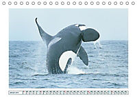 Wale: Giganten der Meere (Tischkalender 2019 DIN A5 quer) - Produktdetailbild 1