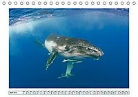Wale: Giganten der Meere (Tischkalender 2019 DIN A5 quer) - Produktdetailbild 4