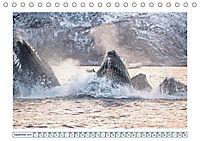 Wale: Giganten der Meere (Tischkalender 2019 DIN A5 quer) - Produktdetailbild 9