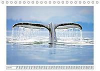 Wale: Giganten der Meere (Tischkalender 2019 DIN A5 quer) - Produktdetailbild 7