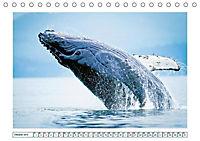 Wale: Giganten der Meere (Tischkalender 2019 DIN A5 quer) - Produktdetailbild 10