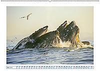 Wale: Giganten der Meere (Wandkalender 2019 DIN A2 quer) - Produktdetailbild 3