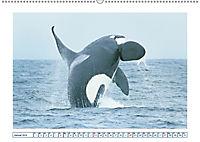Wale: Giganten der Meere (Wandkalender 2019 DIN A2 quer) - Produktdetailbild 1