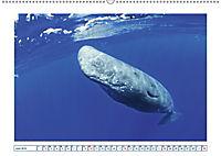 Wale: Giganten der Meere (Wandkalender 2019 DIN A2 quer) - Produktdetailbild 6