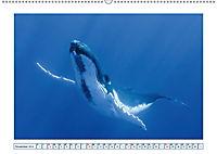 Wale: Giganten der Meere (Wandkalender 2019 DIN A2 quer) - Produktdetailbild 11